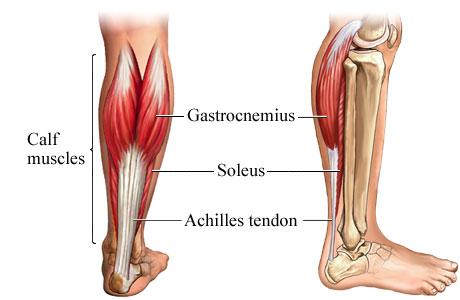 VIDEO: Soleus, mišica zaradi katere stojimo 1